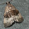 Cobubatha hippotes - Cobubatha nr-hippotes