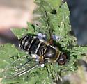 Villa Bee Fly - Villa