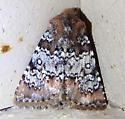 Ramsey Canyon moth - Hemibryomima chryselectra