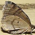 seattle moth ID please
