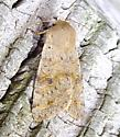 Speckled Green Fruitworm - Orthosia hibisci