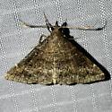 Renia factiosalis - male