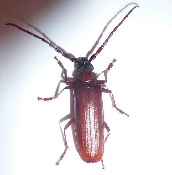 Beetles Found in Michigan Beetle Found in Kalamazoo