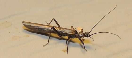interesting tiny bug