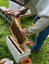 Adding Nucs: going from 1 to 3 hives - male - female