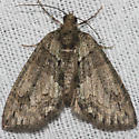 Sharp Green Hydriomena Moth - Hodges#7239 - Hydriomena pluviata