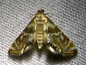 Moth ID Please - Neocataclysta magnificalis