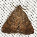 Mobile Groundling Moth - Hodges #9693 - Amyna stricta