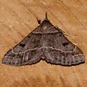 Moth 816-02 - Renia flavipunctalis