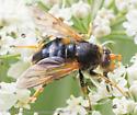 fly - Blera flukei