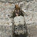 Goldenrod Gall Moth - Hodges#3186 - Epiblema scudderiana