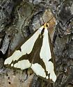 Moth - Haploa lecontei