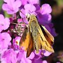 fiery skipper - Hylephila phyleus