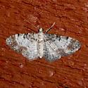Eupithecia mutata or johnstoni - Eupithecia johnstoni