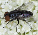 Fly IMG_4020