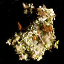 Debris-Carrying Larva