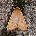 Sloping Sallow - Hodges#9946 - Epiglaea decliva
