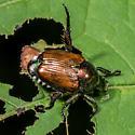 Japanese beetle? - Popillia japonica