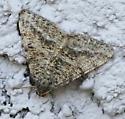 moth, dark brown