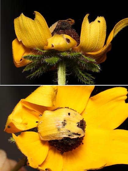 Moth larva herbivory