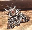 moth 5/9/13 - Harrisimemna trisignata