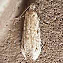 Unknown micro moth