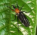 Love bugs?