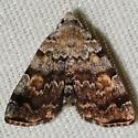 Hodges #8322 – Idia americalis – American Idia Moth - Idia americalis