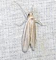 Moth - Arivaca ostreella