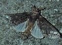 Moth UID 29