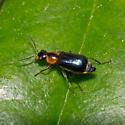 Beetle: 2012.04.16.19579