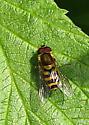 Bee Fly 2