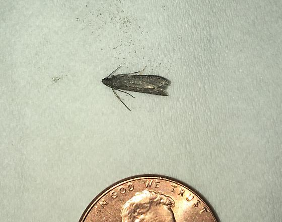 PA Moth--Pest