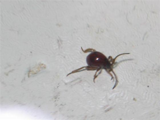 Tiny Insect Needs Identification
