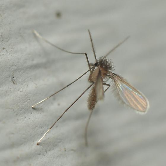 Very Odd Whatsit - Lutzomyia
