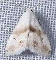 Unknown Moth - Eublemma minima