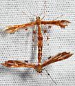 moth - Geina buscki - male