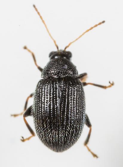 Epitrix fuscula