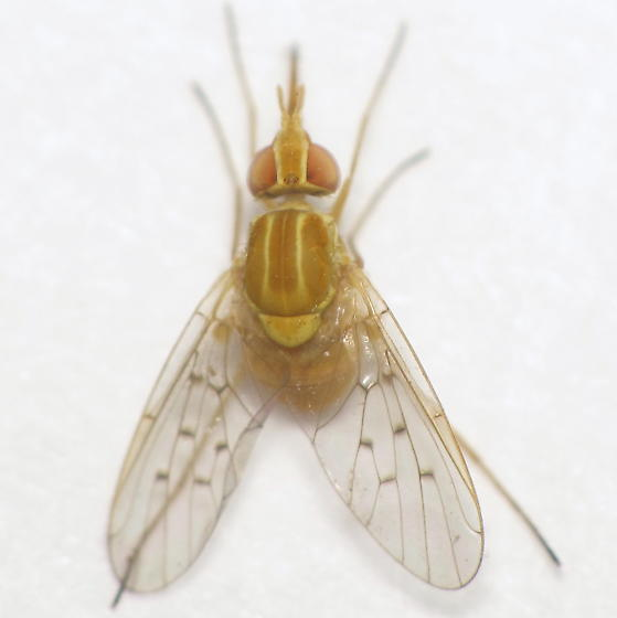 Poecilognathus (?) III - ID request - Poecilognathus