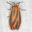 Painted Lichen Moth - Hodges #8090 - Hypoprepia fucosa
