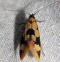Family Oecophoridae - - Decantha stonda