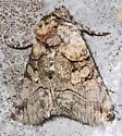 moth - Abrostola microvalis