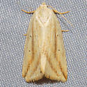 Feeble Grass Moth - Hodges#9818 - Amolita fessa