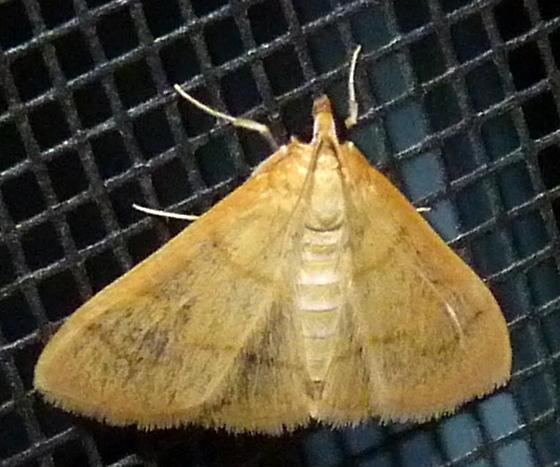 8/11/19 moth