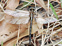 Bad image of unknown Dragonfly 1 - Phanogomphus oklahomensis - male