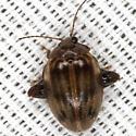 Flea Marsh Beetle - Ora texana