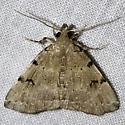 Zanclognatha lituralis