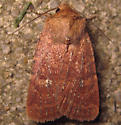 Southern Scurfy Quaker Moth - Hodges#10532.1 - Homorthodes lindseyi