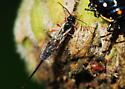 Identity sought for mysterious wasp - female