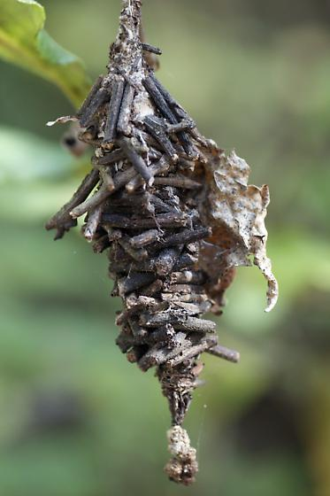 Cocoon Made Of Twigs In Myakka River State Park Florida